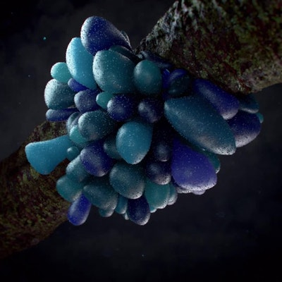 Inflatable Fungi Loop